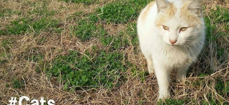 #MBPhotoOfTheWeek Roundup – Cats