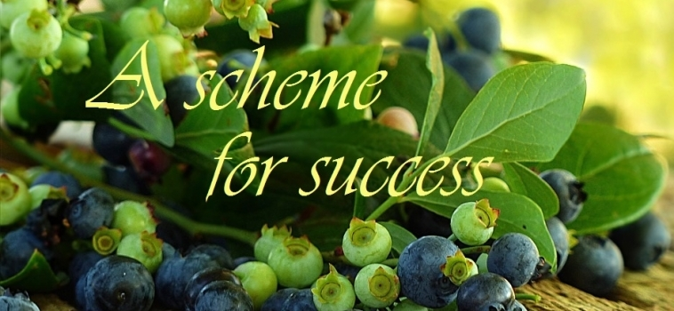 A Scheme for Success