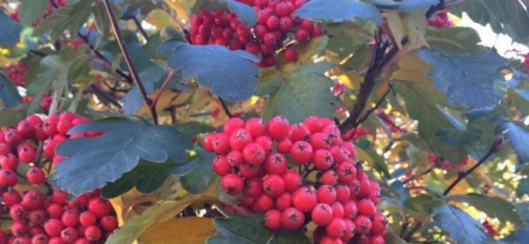 #MBPhotoOfTheWeek Roundup – Autumn